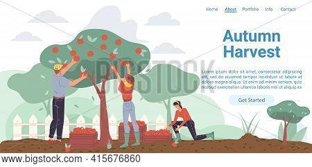 Vector Cartoon Flat Farmer Characters Harvesting, People Workers Harvest Apples In Autumn Season-nat