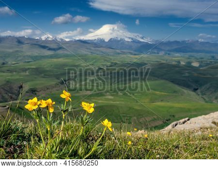 Beautiful view of Mount Elbrus and yellow flowers, North Caucasus mountains, plateau Bermamyt, Russia