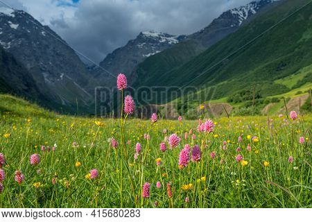 Idyllic mountain landscape with blooming meadows in springtime.