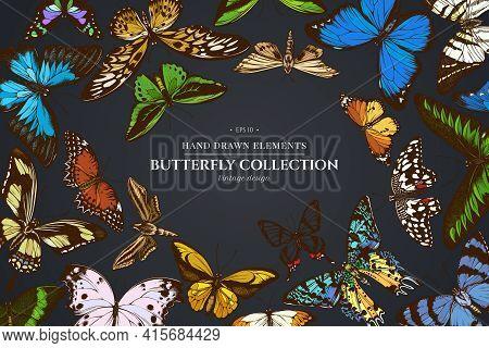 Design On Dark Background With Great Orange-tip, Emerald Swallowtail, Plain Tiger, Rajah Brooke S Bi