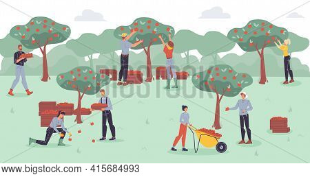 Vector Cartoon Flat Farmer Characters Harvesting, People Workers Harvest Apples With Farm Equipment
