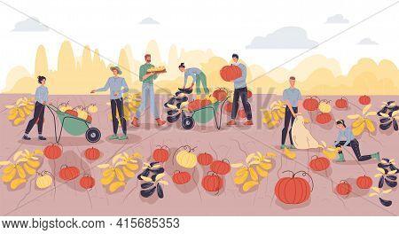 Vector Cartoon Flat Farmer Characters Harvesting, People Workers Harvest Pumpkins Vegetables With Fa
