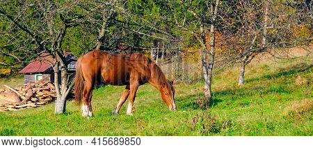 Red Horse With Long Mane In A Green Meadow. Rural Landscape. Wide Photo.