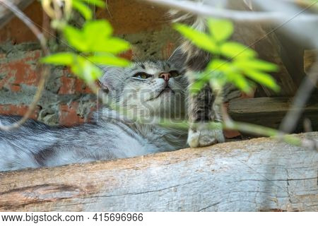 Stray Cat In Abandoned Building. Adorable Street Cat On Brick Grunge Fence Wall Background In Sunny