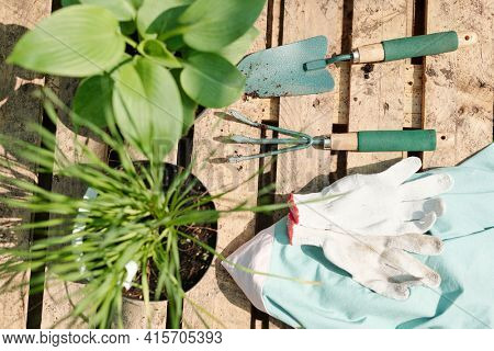 Overview of the floor or support for pots made up of wooden decks with worktools, pair of gloves, potted green plants and blue towel