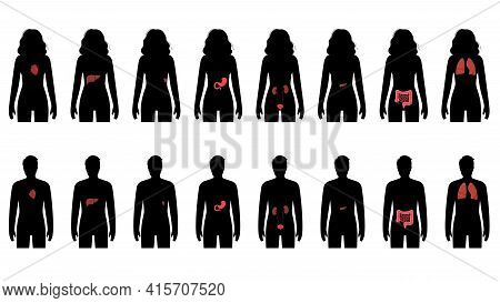 Pain In Internal Organs In A Man And A Woman Body. Problem With Liver, Pancreas, Lungs And Other Org