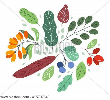 Wild Berries Fresh And Ripe Tasty Healthy Food With Leaves Vector Flat Style Illustration Isolated O