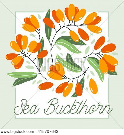 Fresh Delicious Ripe Sea Buckthorn Berries Vector Flat Illustration Isolated On White, Natural Diet