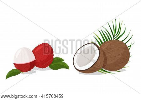Tropical Fruit Lychee And Coconut Isolated On White Background. Fresh Exotic Plants Vector Illustrat