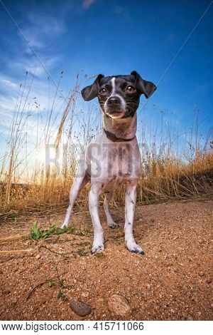 outdoor shot of a cute dog on an isolated blue sky background
