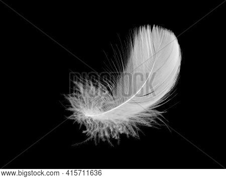 White Fluffy Bird Feather On A Black Background. The Texture Of A Delicate Feather. Soft Focus