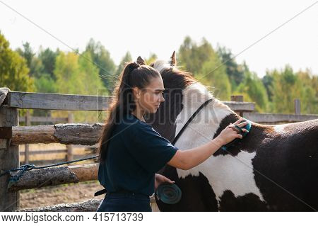 At The Ranch, Grooming Time, A Girl Brushes Her Horse In The Fall At The Paddock