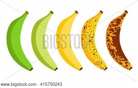 Banana Ripeness Fruit Illustration Green Mature Bad Food. Banana Ripe Vector Icon