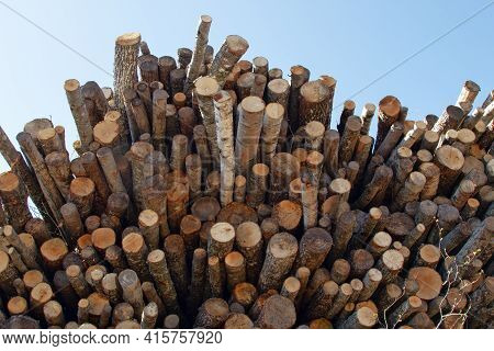 A Stack Of Logs Against The Sky. Aspen