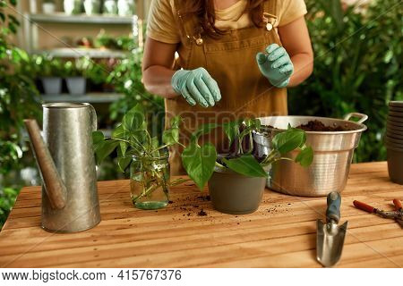 Girl Standing At A Table With Plants And Black Earth. Gardener With Gloves Working In The Garden. Ho