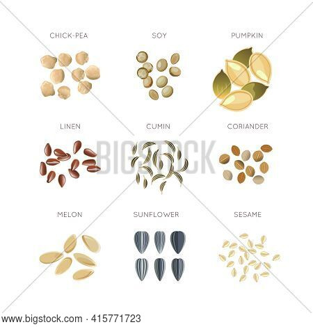 Cereal Grains Flat Vector Icons Set. Chick-pea And Linen, Cumin And Coriander, Melon And Sesame Illu