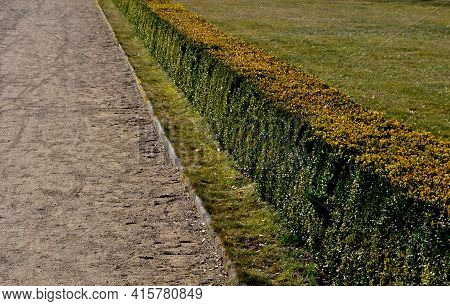 Summer Chateau Parterre With Boxwood Hedges Honestly Trimmed Around Which The Path Leads A Path Of B