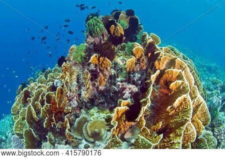 A Coral Reef Surrounded By Blue Water And Various Fish. Soft And Hard Corals Of Different Shapes, Co