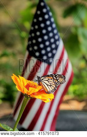 Beautiful Monarch Butterfly Feeding On A Large Orange Flower In Front Of A Small American Flag.
