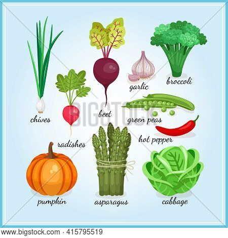 Healthy Fresh Vegetables Icons With Names Including  Chives  Radish  Garlic  Broccoli  Pumpkin  Aspa