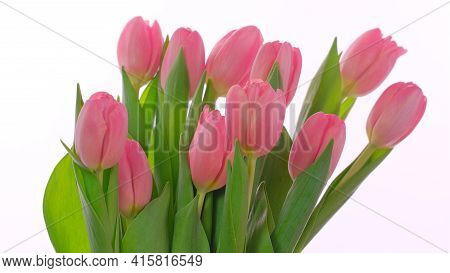 Pink Greeting Card For Mothers Day, Womens Day, 8 March With Pink Tulips Flowers On White Background