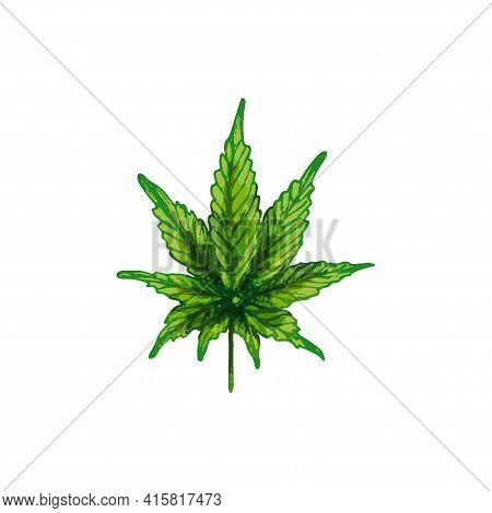 Marijuana Hybrid Leaf. Vector Color Vintage Hatching Illustration Isolated On A White Background. Fo