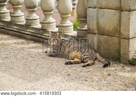 Stray Cat Laying On A Gravel Path In A Park