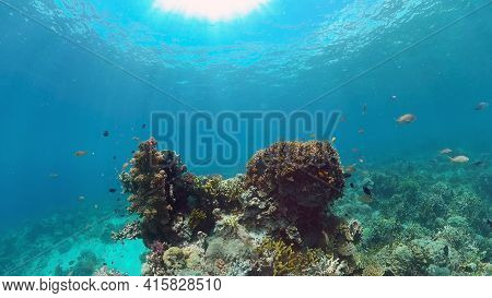 Colourful Tropical Coral Reef. Scene Reef. Marine Life Sea World. Philippines.