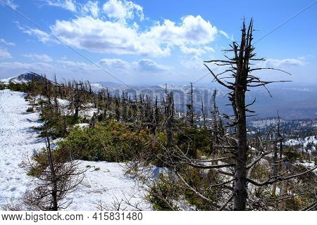 Dry Forest Pine Trees In View Of Mount Hachimantai,snowy On Mountain Range With Blue Sky In Morning
