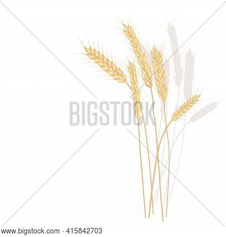 Wheat Vector Stock Illustration. Rye. Ears Of Oats. Golden Ripe Barley Grains. A Field Plant. Illust