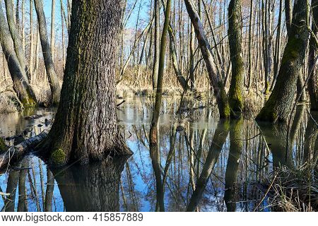 A Swampy Area In A Deciduous Forest During A Thaw In Poland