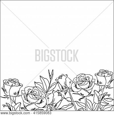 Contour Drawing Of Rose Buds By Hand, Border Of Roses, Black And White Coloring, Design, Floral Hori