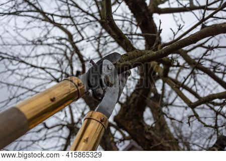Pruning Fruit Trees With Pruning Shears. Scissors Cut Branches. Work In The Garden In Spring And Aut