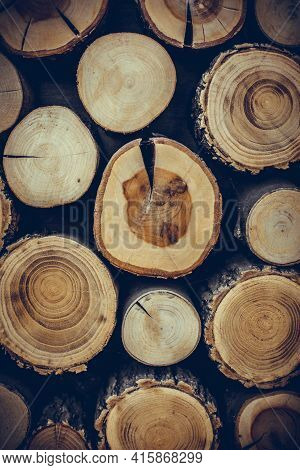 Wood Logs Cut In Section, Background Concept