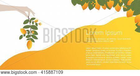 Sunny Fruits, Lemons, Oranges Concept. Hand Holding A Branch Of Lemons. Banner, Template For A Websi