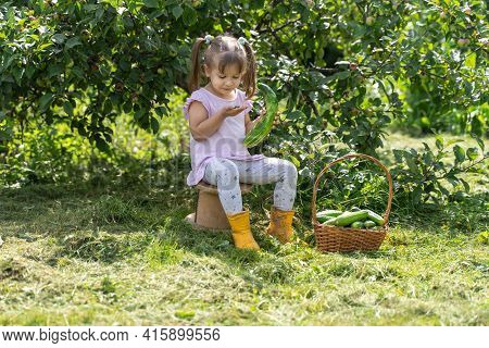 Kid Girl With Basket Of Cucumbers On The Farm. The Child Took A Bite Of A Bitter Cucumber And Spat I