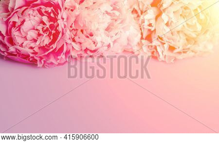 Peonies, bouquet, frame, postcard, mother's day, birthday. Summer or spring flowers.