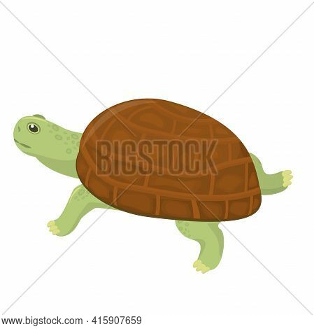 Vector Illustration Of A Land Turtle Isolated On A White Background