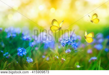 Summer Background With Forget Me Not Blue Flowers And Butterflies. Beautiful Nature Landscape.