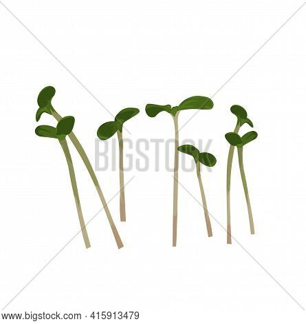 Micro Greenery Vector Stock Illustration. Sprouts Of Young Plants. Sprouted Seeds Are Green Grass. Y