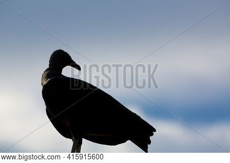 Silhouette Of Scavenger Against A Cloudy Blue Sky, Brazil
