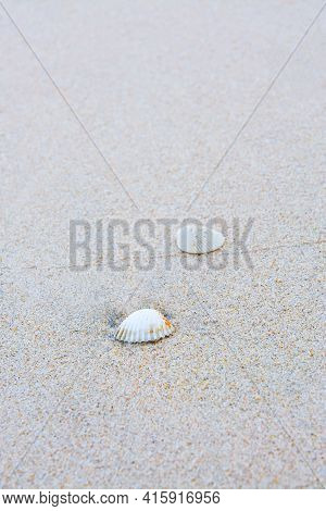 Sea Shells On Sand., Sea Shell On The Tropical Sandy Beach And Space For Text.