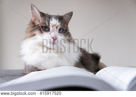 Gray Cat With Glasses Reads A Book Lying On The Bed. Smart Pet. Animal Librarian.