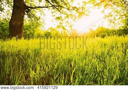 Summer Sunny Forest Trees And Green Grass. Nature Woods Sunlight Background. Instant Toned Image. Fo