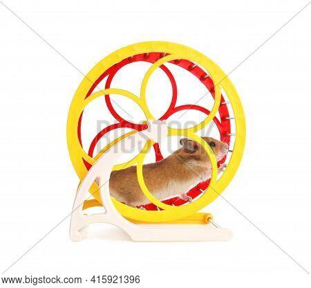 Cute Little Hamster In Spinning Wheel On White Background