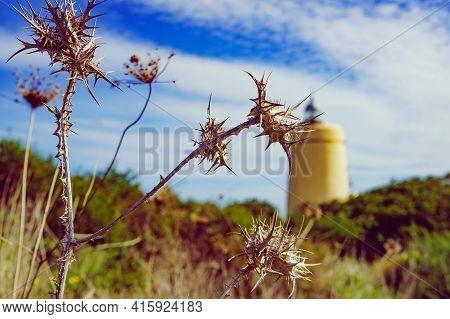 Dry Plant And Carbonera Lighthouse In The Distance. Punta Mala, La Alcaidesa, Spain. Lantern Overloo