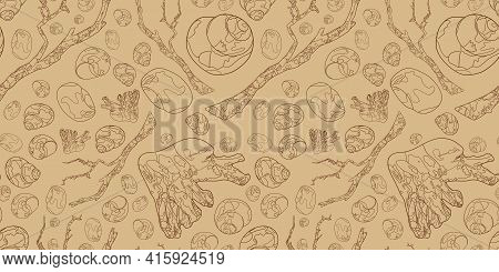 Banner With Seashells And Snags. Marine Elements On A Beige Background. Marine Background. Outline D