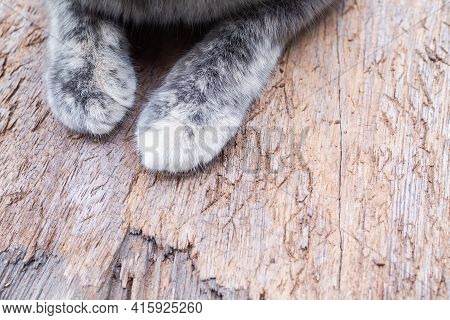 Cat Paw On Wood Close Up. Calico Cat Or Tortoiseshell Cat. Authentic Domestic Animals. Pet Cute.