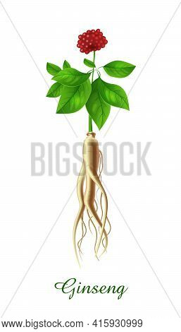 Ginseng Plant, Green Grasses Herbs And Plants Collection, Realistic Vector Illustration