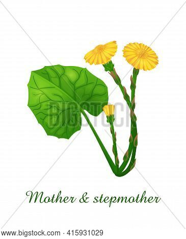 Mother And Stepmother Plant, Green Grasses Herbs And Plants Collection, Realistic Vector Illustratio